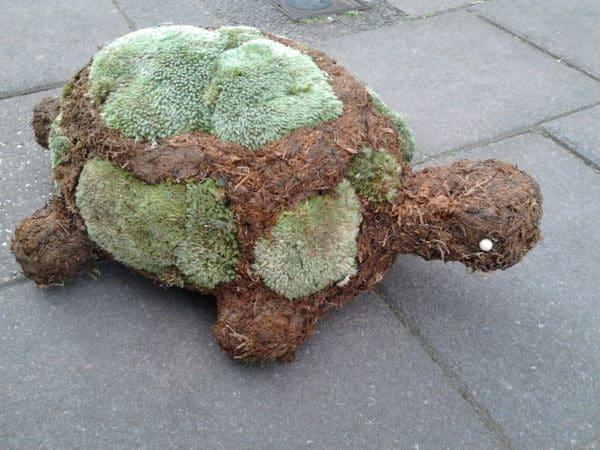 Tortoise Large 1