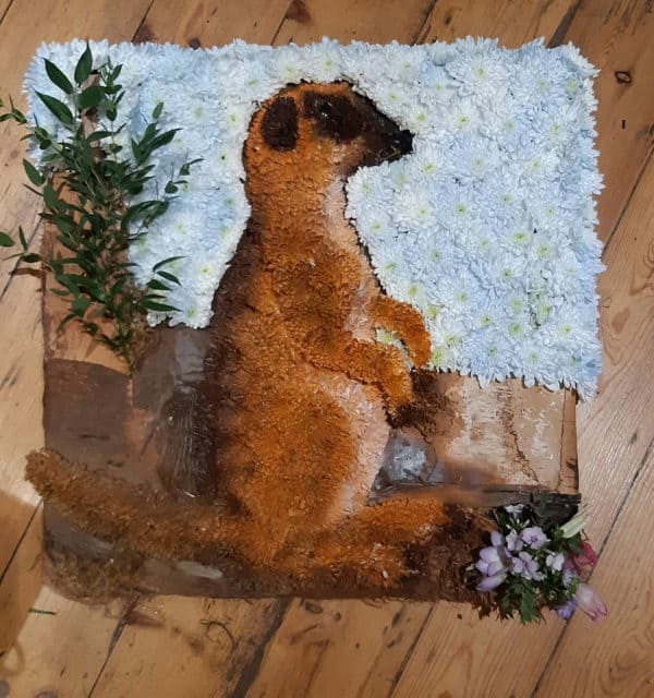 Meerkat Design Board 1